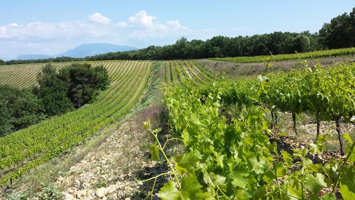 Les vignes du Domaine du Jas, Rhône